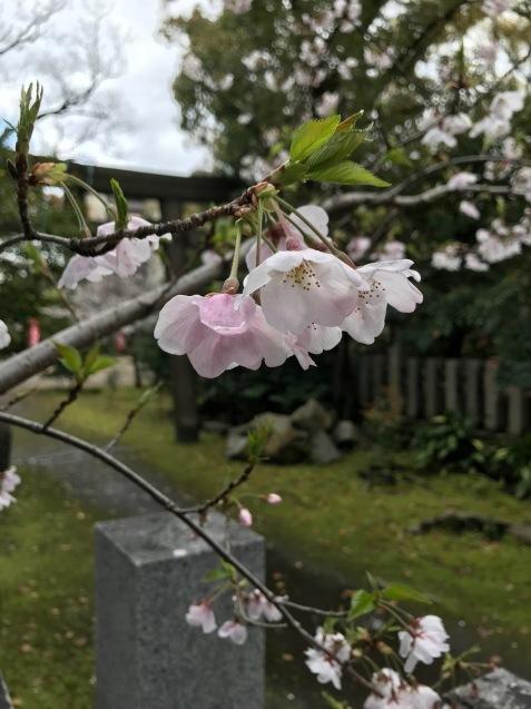 今年の桜は友人とともに_f0134963_01190189.jpg