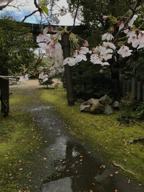 今年の桜は友人とともに_f0134963_01191769.jpg