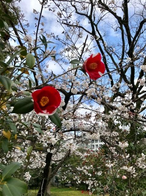 今年の桜は友人とともに_f0134963_01202064.jpg