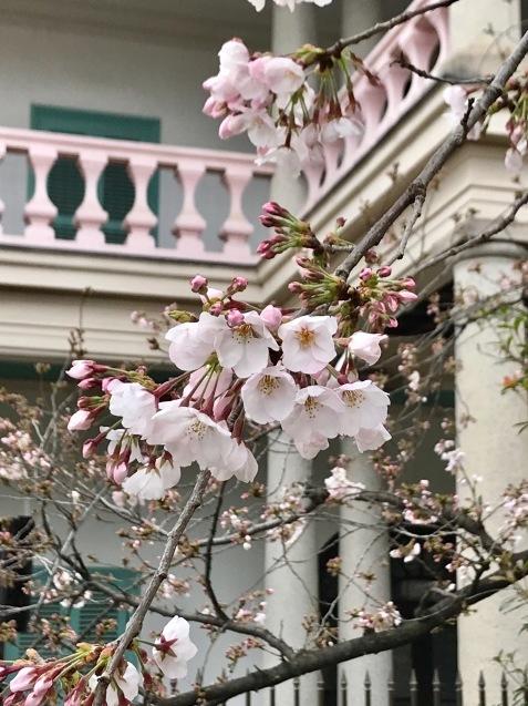 今年の桜は友人とともに_f0134963_01464418.jpg