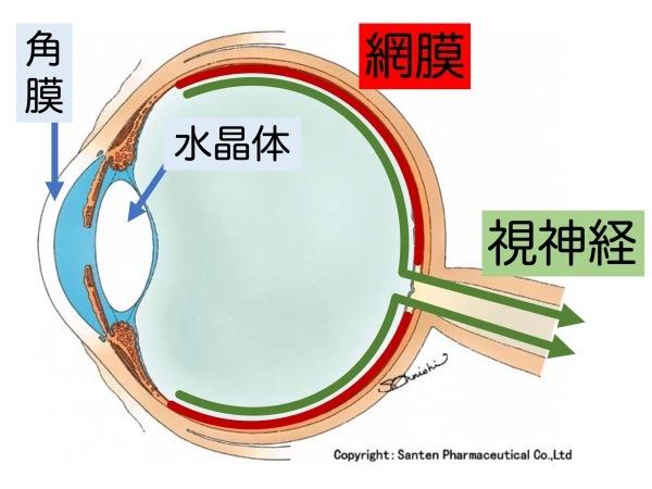 第3章 誤解その3「眼圧が高いと緑内障」_a0257968_16055551.jpeg