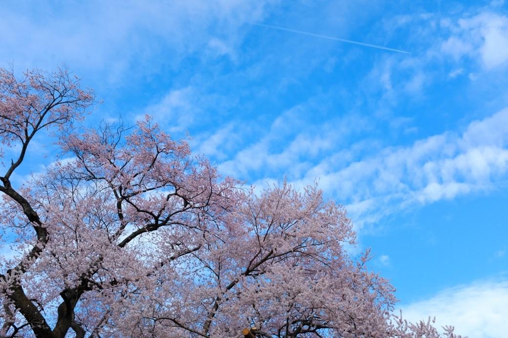 矢祭町「戸津辺の桜」&水郡線 <3> 2020・03・28_e0143883_17370242.jpg