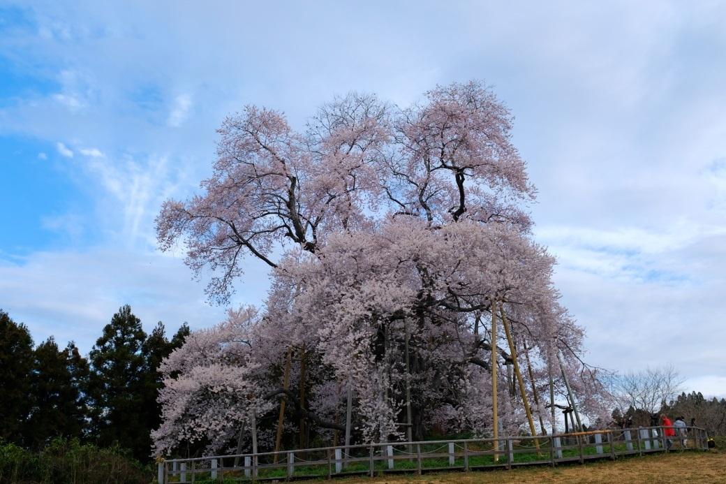 矢祭町「戸津辺の桜」&水郡線 <3> 2020・03・28_e0143883_17395665.jpg