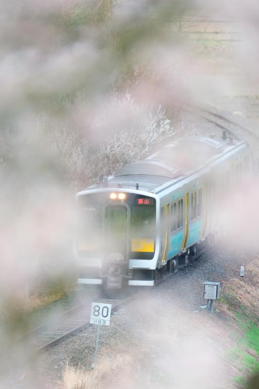 これでパチリ!! 矢祭町「戸津辺の桜」&水郡線 <4> 2020・03・28_e0143883_18053037.jpg