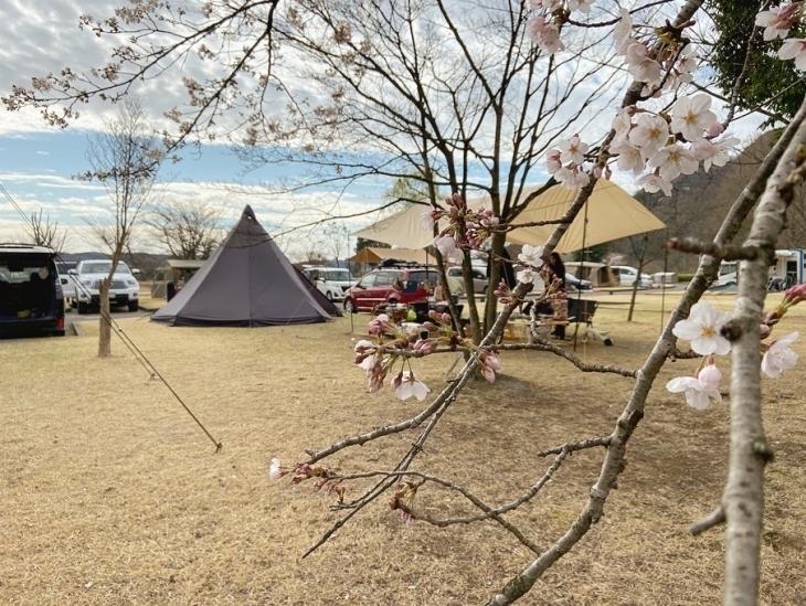 monmiyaと桜キャンプと_a0127284_05545022.jpg
