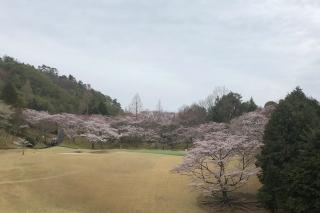 確かに桜を見た_a0233991_17171631.jpg
