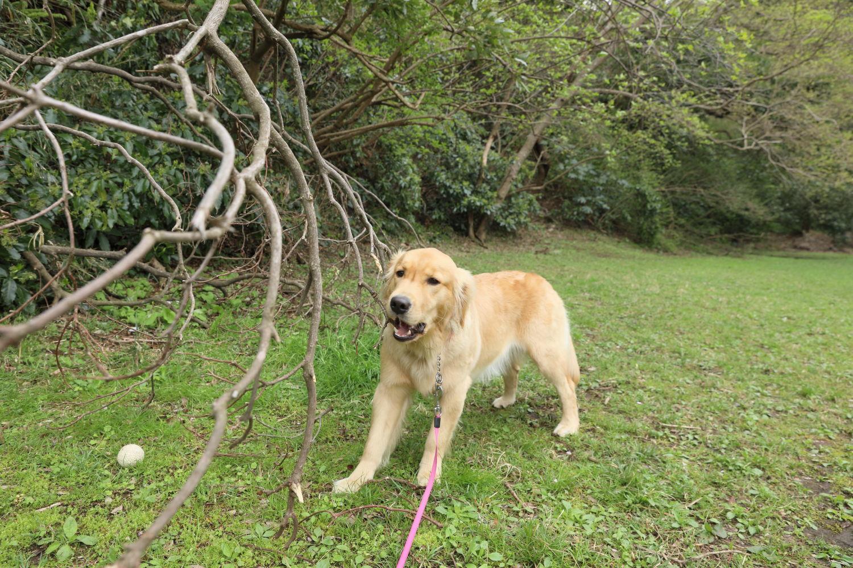 枝が好き♪_b0275998_12144214.jpg