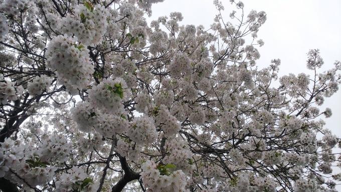 春うらら_b0239402_17312268.jpg