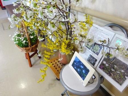 里山の花が病院に届きました!_b0393105_10124679.jpg
