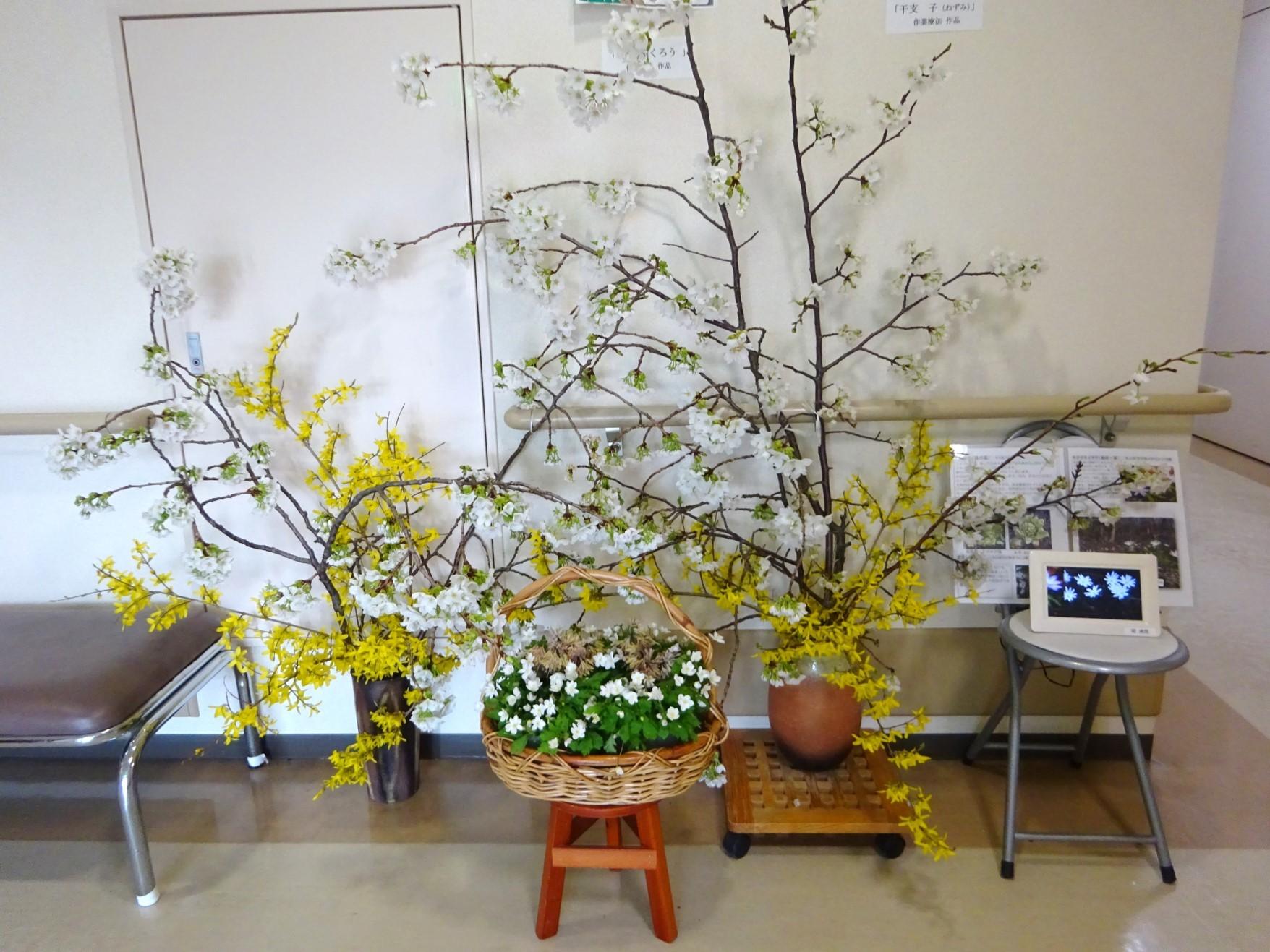 里山の花が病院に届きました!_b0393105_10125392.jpg