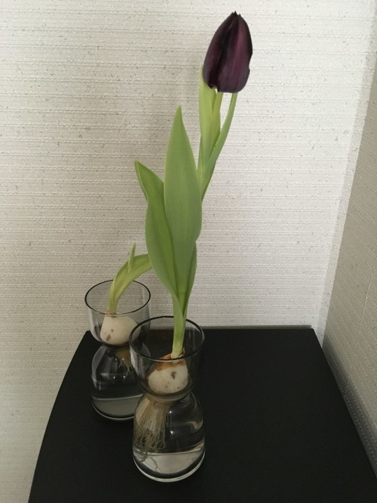 咲いた 咲いた_c0278306_10181862.jpeg
