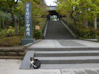 円覚寺の猫_c0195909_12534186.jpg