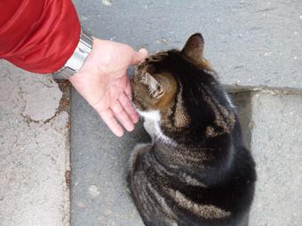 円覚寺の猫_c0195909_12535103.jpg