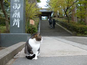 円覚寺の猫_c0195909_12541278.jpg