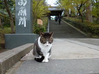 円覚寺の猫_c0195909_12541969.jpg