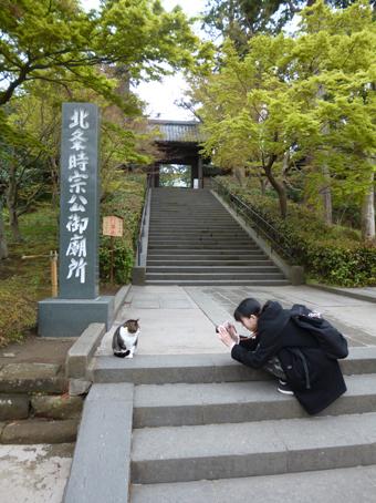 円覚寺の猫_c0195909_12542445.jpg