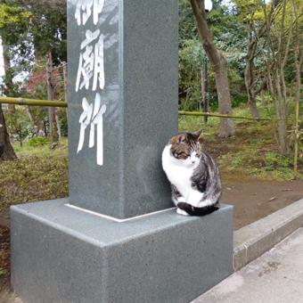 円覚寺の猫_c0195909_12542988.jpg