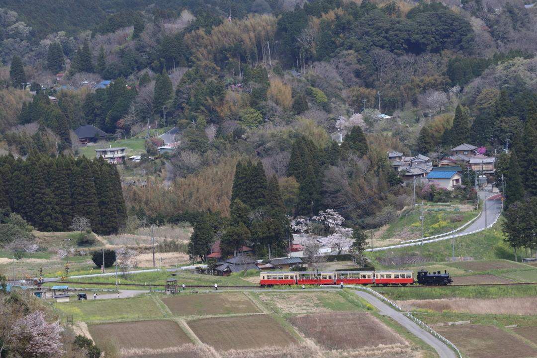 桜咲く里を走るトロッコ列車 - 2017年・小湊鉄道 -_b0190710_22084429.jpg