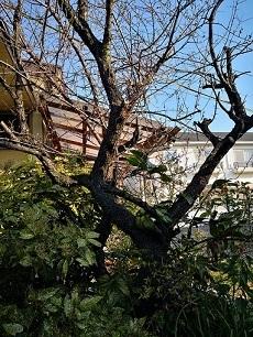植木の引っ越し(中平)_f0354314_12384192.jpg
