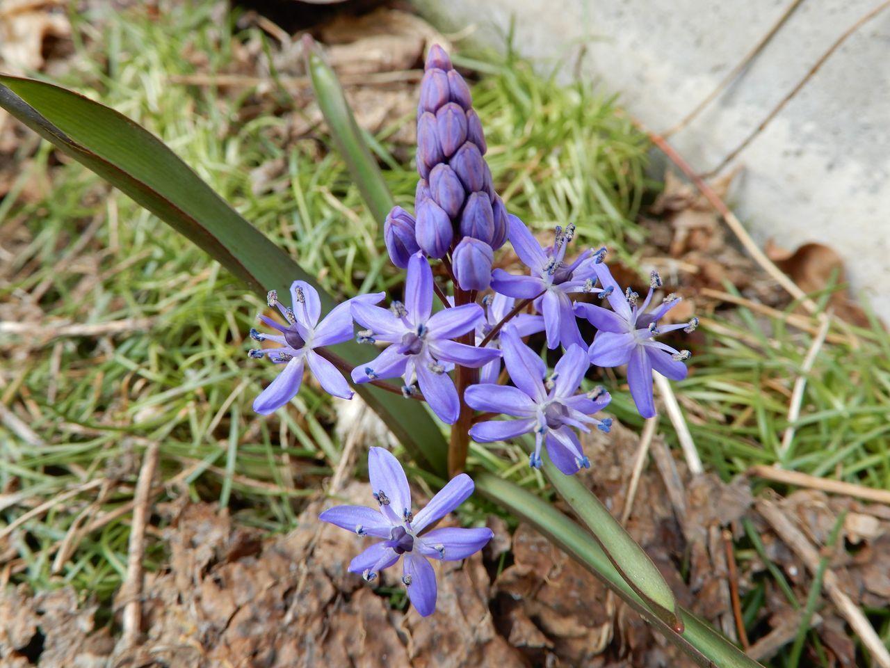 春や春_c0025115_22004548.jpg