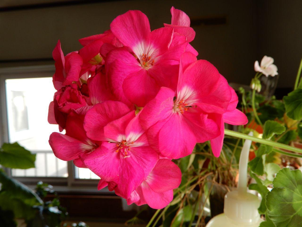 春や春_c0025115_22010980.jpg