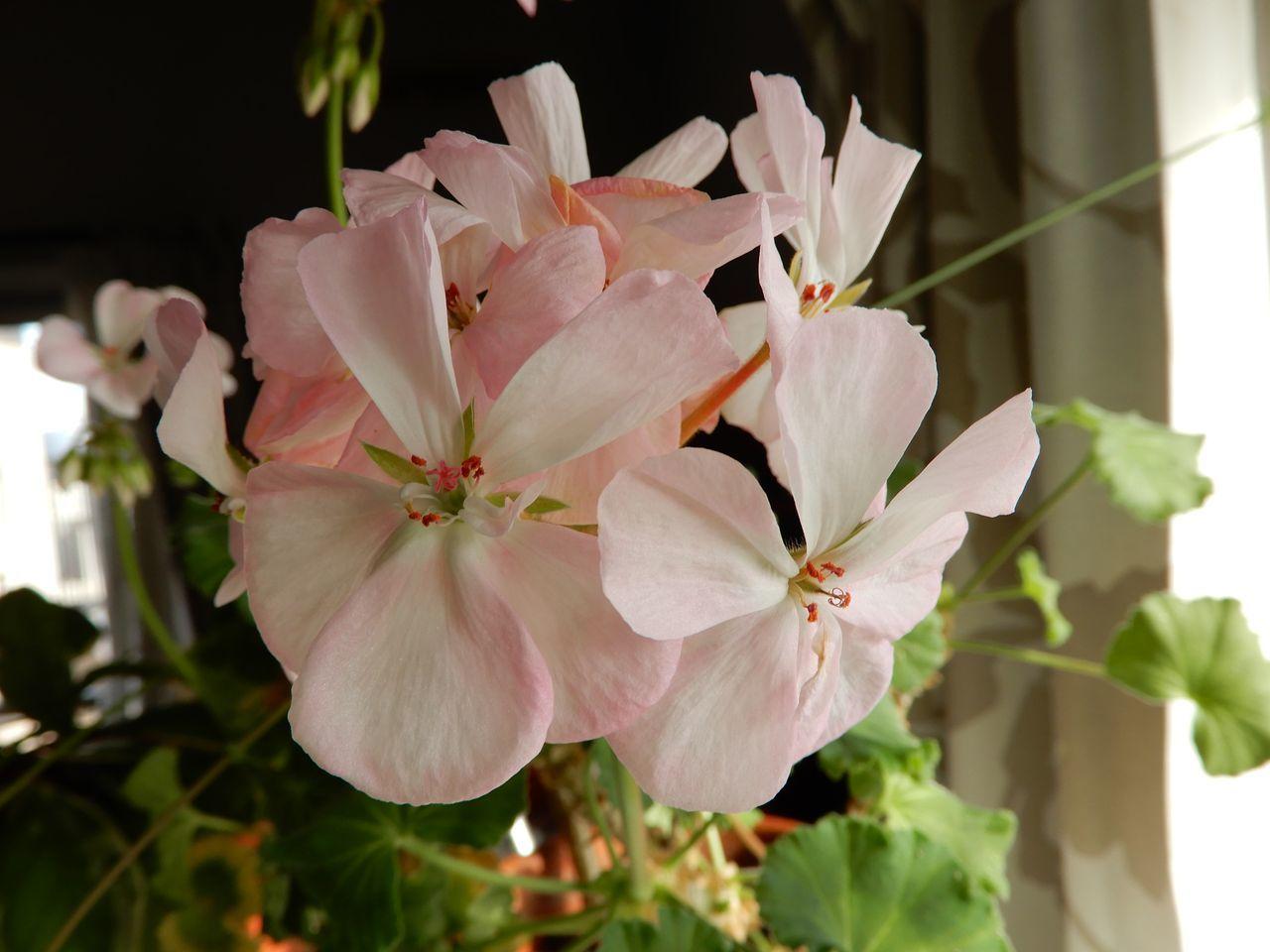 春や春_c0025115_22011260.jpg