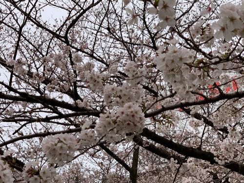 大阪市福島区のやきとり六源です!_d0199623_01354532.jpg