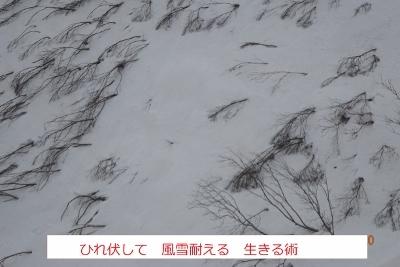 春の残雪蔵王_e0265627_14251047.jpg