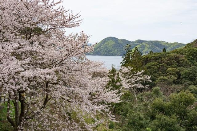 3/31 和多都美神社の桜と烏帽子展望台 _a0080832_13181081.jpg