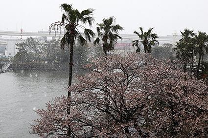 2020年の3月29の日曜日は雪でした。_f0165332_19074509.jpg