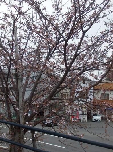春の訪れ_c0038742_11153707.jpg