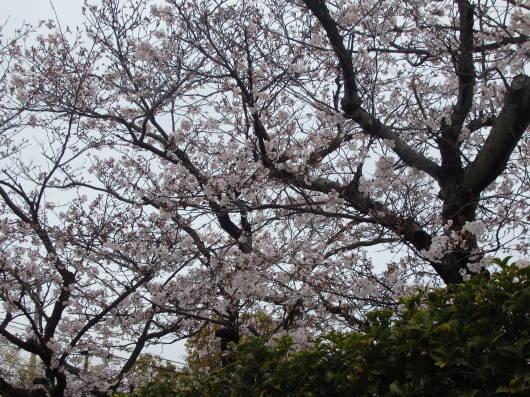 春の訪れ_c0038742_11163180.jpg