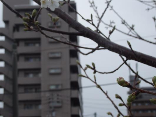 春の訪れ_c0038742_11165714.jpg