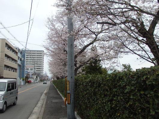 春の訪れ_c0038742_11170642.jpg