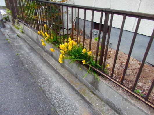 春の訪れ_c0038742_11171907.jpg