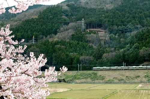 海津大崎桜と清水の桜・・・麒麟がくる!_d0005250_17593272.jpg