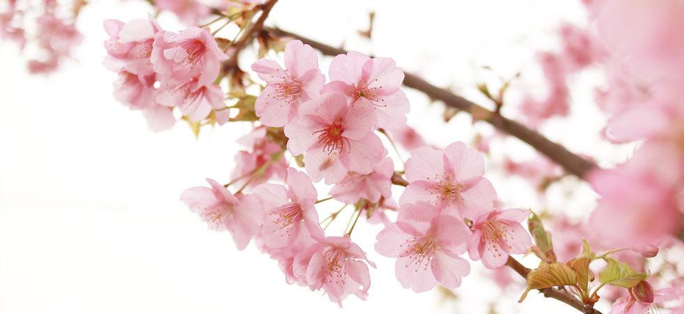 4月のイベントについて_e0219353_00375903.jpg