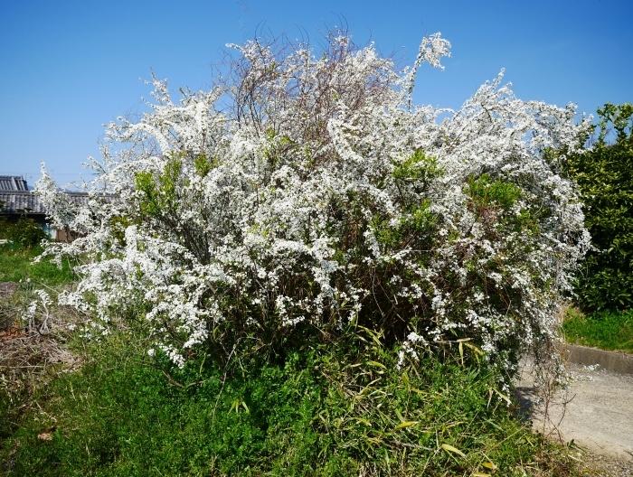 春の花咲く里山をゆく 2  2020-04-01 00:00   _b0093754_22082483.jpg