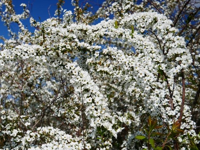 春の花咲く里山をゆく 2  2020-04-01 00:00   _b0093754_22085406.jpg