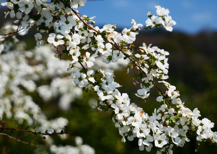 春の花咲く里山をゆく 2  2020-04-01 00:00   _b0093754_22090431.jpg