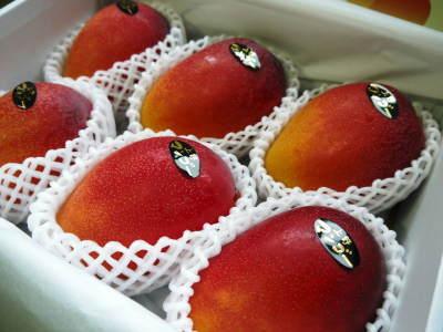 完熟アップルマンゴー マンゴーの花!25年目を迎える今年も惜しまぬ手間ひまで花芽を全て吊って育てます!_a0254656_17122623.jpg