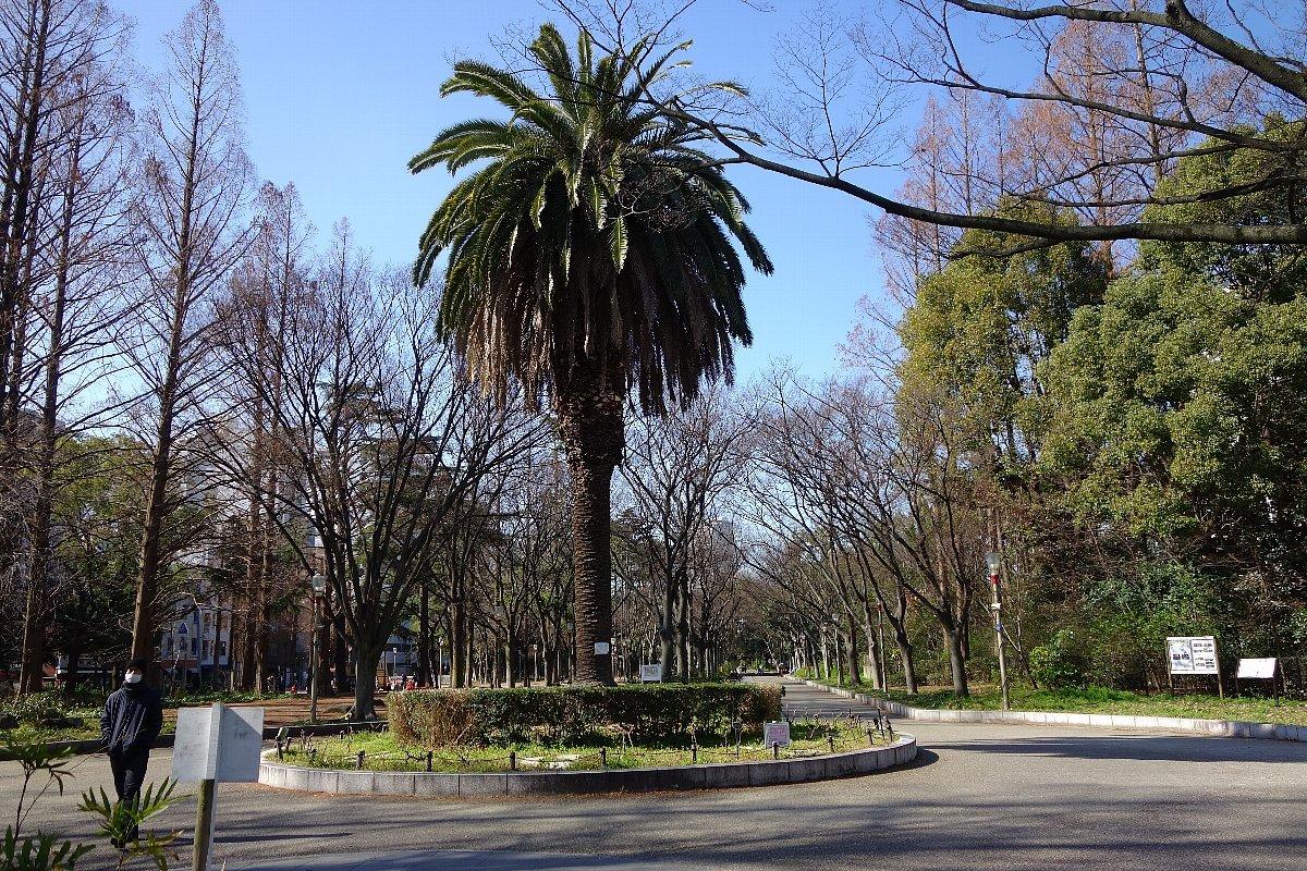 靭(うつぼ)公園 東園_c0112559_08142395.jpg