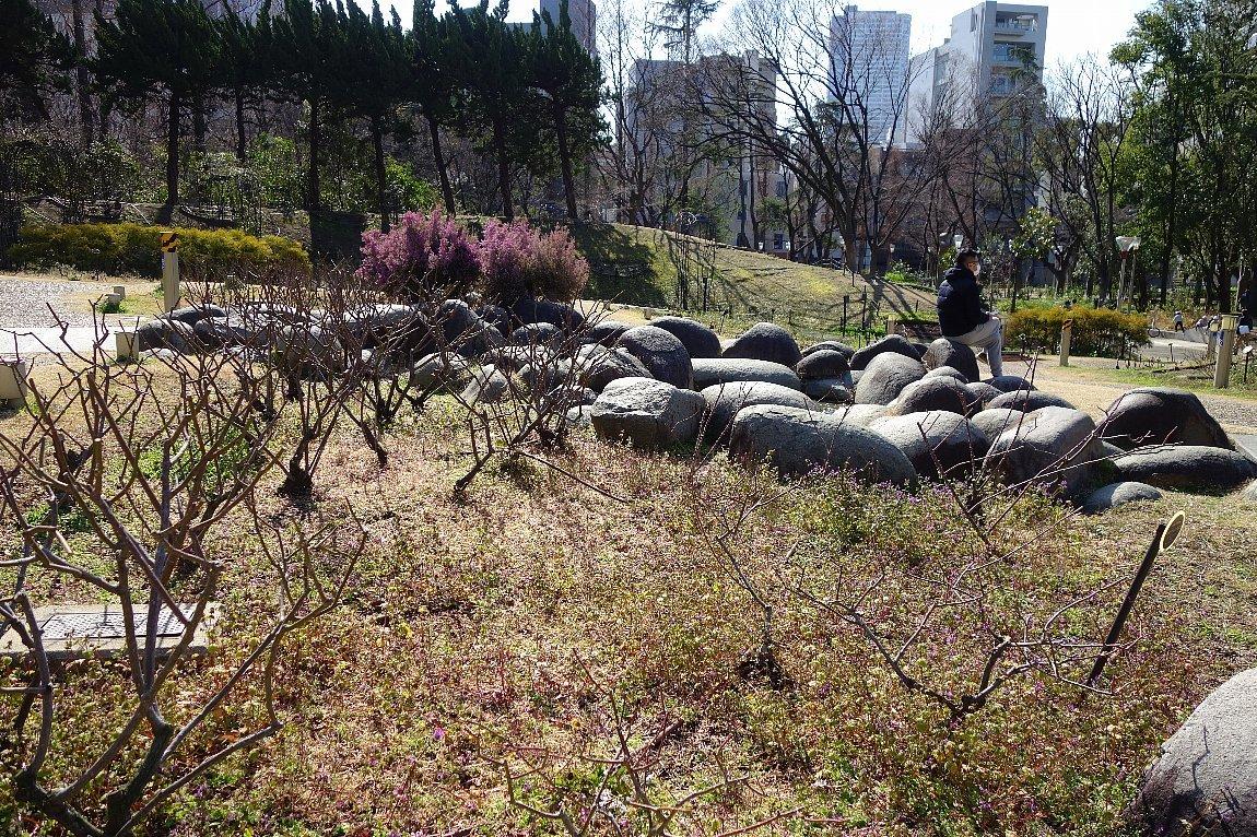 靭(うつぼ)公園 東園_c0112559_08170033.jpg