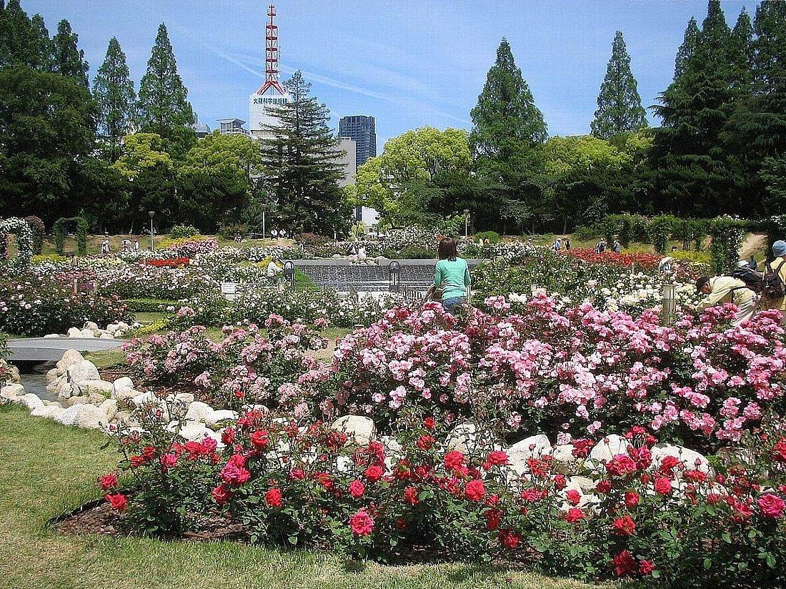 靭(うつぼ)公園 東園_c0112559_08244386.jpg