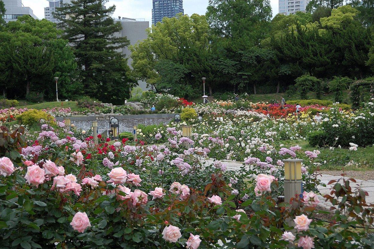 靭(うつぼ)公園 東園_c0112559_08252006.jpg
