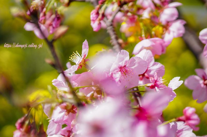 花ハナはな・・・_a0333661_12253124.jpg