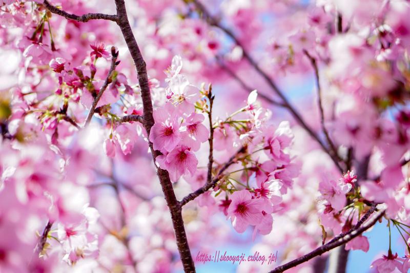 花ハナはな・・・_a0333661_12254872.jpg