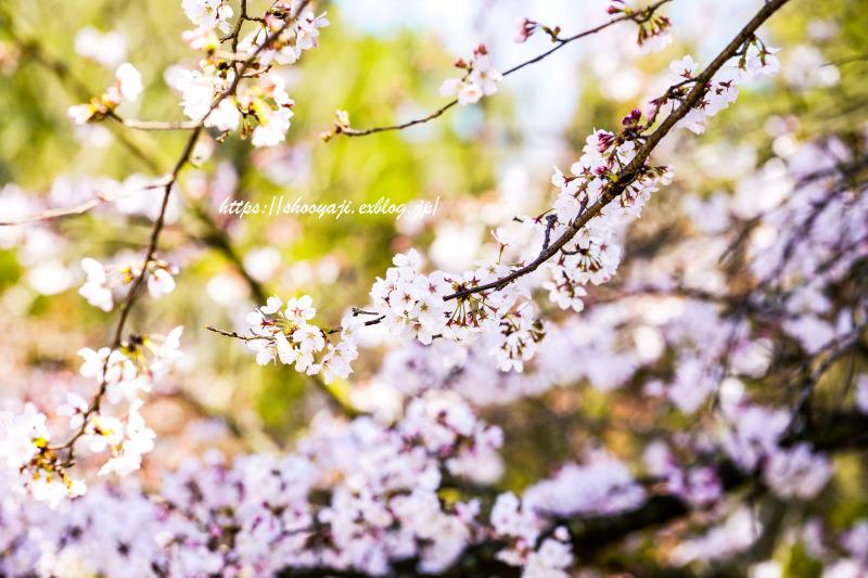 花ハナはな・・・_a0333661_12352716.jpg