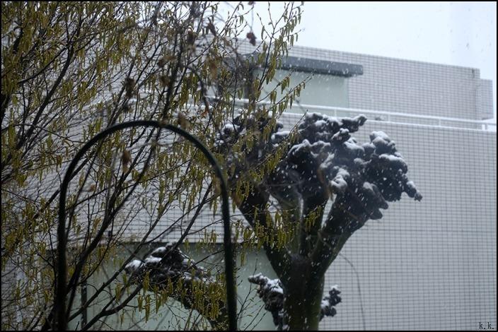 春の雪を朝から観察しました_a0031363_22554924.jpg