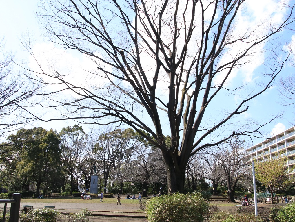 3月11日(用事があり) 東京都大田区_d0202264_1413039.jpg